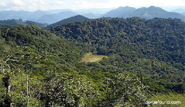 Im�vel: Total Im�veis - Terreno, Sao Sebastiao (208911)