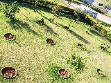 Comprar Casas / em Condomínios em Araçoiaba da Serra apenas R$ 1.190.000,00 - Foto 31