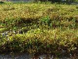 Comprar Terrenos / em Condomínios em Sorocaba apenas R$ 130.000,00 - Foto 3
