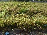 Comprar Terrenos / em Condomínios em Sorocaba apenas R$ 130.000,00 - Foto 1