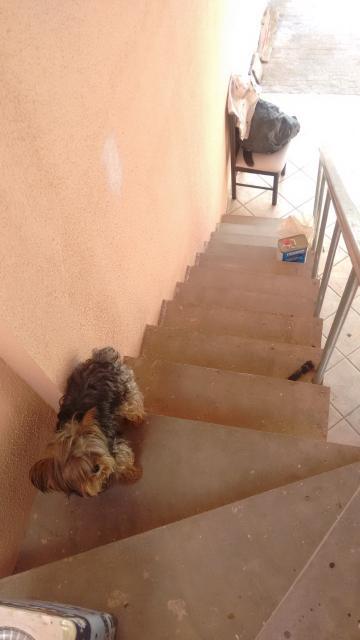 Alugar Casa / em Bairros em Sorocaba R$ 4.000,00 - Foto 27